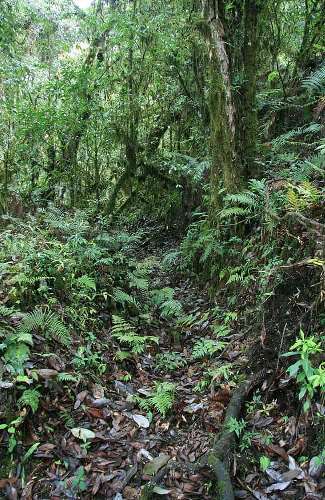 East Bhutan Trek trail